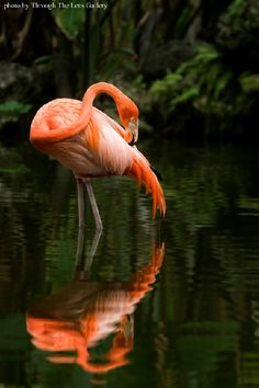 Flamingo Gardens Celebrates 85 Years!  Established in 1927, Flamingo Gardens is one of the oldest botanical gardens in South Florida. The 60-acre not-for-profit botanical garden contains over 3000 tropical and sub-tropical species of plants and trees and it's Everglades Wildlife Sanctuary is home to the largest collection of Florida native wildlife in the state.