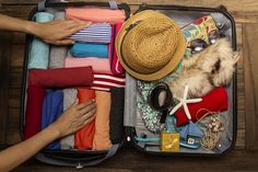 Your weekend getaway just got easier with this packing hack! Free Gift Cards, Free Gifts, Packing Tips, Weekend Getaways, Marvel, Travel Tips, Promotional Giveaways, Travel Advice, Travel Hacks