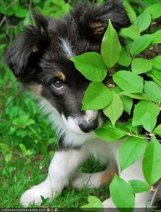 Border Collie. Turbo Charge Read and gain a solid basis of understanding. http://youtu.be/LyO3EkP1TdY