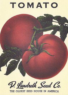 Heirloom Vegetable Seed Packet Note Cards
