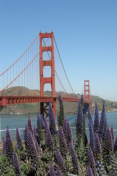 San Francisco Travel Bucket List: Marvel at the view of the iconic Golden Gate Bridge #San #Francisco