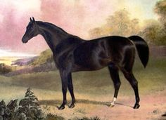 """Whalebone(1807)(Colt)Waxy- Penelope By Trumpator. 3x4 To Herod, 4(C)x4(F)x5(F) To Snap, 5x5 To Cade, 5(F)x5(F) To Blank. 20 Starts 14 Wins 2 Seconds 3 Thirds. Won Epsom Derby(Eng). Leading Sire In England & Ireland In 1826 & 1827. Whalebone Is One Of Several Foals Covered By Waxy To Prunella And One Of Her Daughters That Formed The """"Large Heart"""" Found In Many Horses Today."""