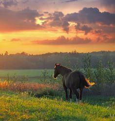 Animal Photography by Riga, Latvia based photographer Tamara Patrejeva.