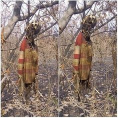 Wicked World: Woman Missing for Months Found Dead with Corpse Hanging on a Tree (Graphic Photos)