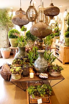 love!!!! orchids, succulents, lanterns, candles!!!    photo: nay vogel                                                                                                                                                                                 More