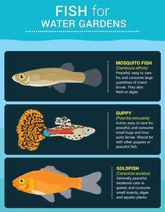 wasserspiel garten Fish For Water Gardens - Water Features For Small Gardens