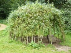 What Is A Willow Dome – Information On Building With Willow Branches