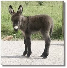 Image result for cute donkey carts