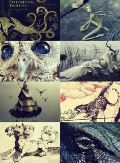 FANTASTIC BEASTS AND WHERE TO FIND THEM Draco dormiens nunquam titillandus