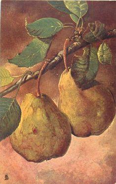 Pears. Postcard circa 1904.