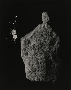 """Masao Yamamoto, Shizuka=Cleanse (Zen) no.3027. Shizuka=Cleanse Living in the forest, I feel the presence of many """"treasures"""" breathing quietly in nature. I call this presence """"Shizuka."""" """"Shizuka"""" means cleansed, pure, clear, and untainted. I walk around the forest and harvest my """"Shizuka"""" treasures from soil. I try to catch the faint light radiated by these treasures with both my eyes and my camera. In Tao Te Ching , an ancient Chinese philosopher Lao-tzu wrote , """"A great presence is hard to…"""