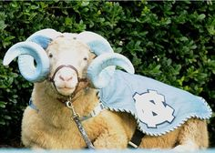 We bet you don't know who Ramses the Ram is? Follow @vetstreet.com and learn about NC Chapel Hill Mascot
