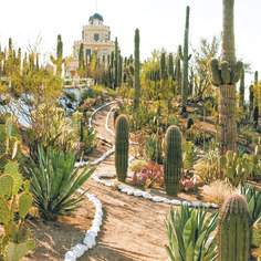 8 quirky, odd or peculiar Arizona attractions - Modern Arizona Cactus, Tucson Arizona, Arizona Road Trip, Arizona Travel, Pheonix Arizona, Arizona Attractions, Cactus Plante, Dry Garden, Desert Life