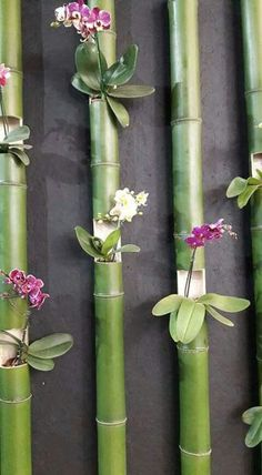 Creative Gardening: Orchid and Bamboo Wall Garden The Orchid Fever. Create a very unique wall garden with different kinds of orchids planted in a bamboo woods.Fazer ao redor do chuveirão.How to Care for Orchids So They Live & Grow Them Correctly So Garden Types, Diy Garden, Garden Projects, Garden Landscaping, Bamboo Garden Ideas, Garden Benches, Terrace Garden, Garden Beds, Diy Bamboo