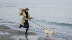 Beach, Dog Sea Beach Sand Water Surf Blue Coast R #beach, #dog, #sea, #beach, #sand, #water, #surf, #blue, #coast, #r