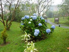 Beautiful flowers at Kioro Hotel in Arenal, La Fortuna