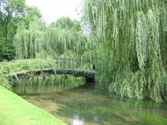 Bridge over River Test, Mottisfont Abbey & Gardens, Hampshire, England. Recommended by http://www.fishinglondon.co.uk/