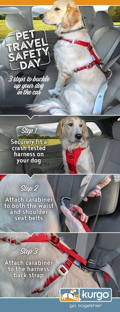 Every day is Pet Travel Safety Day for most pet owners! Do you know the 3 Steps to buckle up your dog in the car? Taking the time to learn how to secure your dog in the car will make you both safer on the road. Dog Training Classes, Training Your Dog, Training Tips, Chug Dog, Dog Car Accessories, Travel Accessories, Dog Steps, Dog Information, Dog Safety