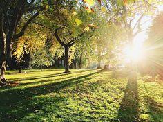草甸, 树, 阳光, 阴影, 人工林, 草, 植物区系, 农村, 公园, 自然, 户外