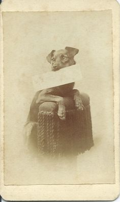 "c.1870s cdv of terrier holding a card in his mouth. The writing on the card is too faint to read but the first letter is a typed ""W."" On verso, in dipped-ink pen, is written, My Dog Keto. From bendale collection"