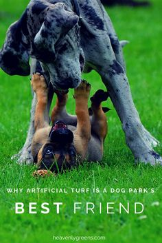 Why Artificial Turf is a Dog Park's Best Friend http://www.heavenlygreens.com/blog/artificial-truf-at-dog-parks