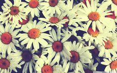 free download vintage flower backgrounds hd
