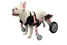 Front Neoprene Harness  The new Front Neoprene Harness is used to support the front legs of your dog. Compatible with the Quad Walkin' Wheels wheelchair Provides extra support and comfort for your dog Provides owner with lifting support for the front end of your dog Durable neoprene material Machine washable; hang dry Comes in 4 different sizes: XSmall, Small, Medium, and Med/Large Ideal for dogs under 45 lbs.