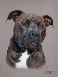 Pittie Order an oil painting of your pet now at www. Animal Paintings, Animal Drawings, Art Drawings, Pastel Drawing, Pastel Art, Dog Portraits, Portrait Art, Drawn Art, Dog Artwork