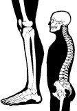 NPDO (Nueva terapia de puntos de dolor y de órganos) : El fisioterapeuta