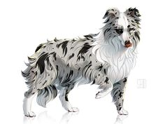 Sheltie by Mr-SKID Creature Drawings, Animal Drawings, Drawing Animals, Art Drawings, Border Collie Art, Cartoon Dog, Anime Animals, Fabulous Beasts, Beautiful Drawings