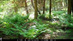 The UK's trail camera and wildlife camera trap experts. Non-profit, projects around the world and tha latest wildlife-watching equipment. Wooded Backyard Landscape, Forest Landscape, Backyard Landscaping, Nature Gif, Wildlife Nature, Back Gardens, Outdoor Gardens, Wild Life Videos, Succulent Outdoor