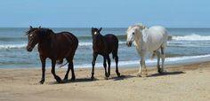 Playa de Mar de las Pampas por Claudia Villalba