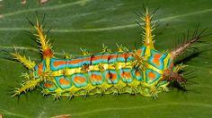 Los insectos más inverosímiles del mundo