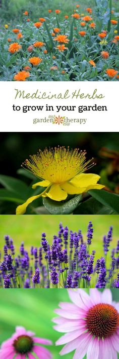The Top Medicinal Herbs to Grow in Your Garden