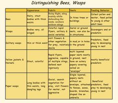 Distinguishing Bees, Wasps