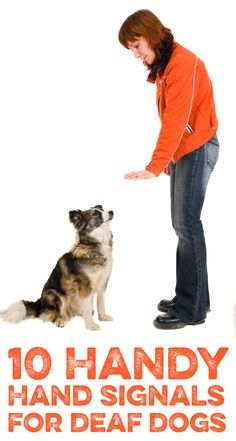 10 Handy hand signals for deaf dogs! My dog is not deaf but I still think this will come in handy