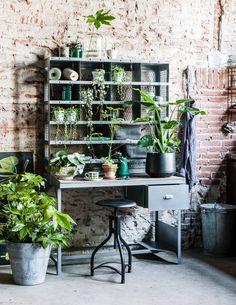 #Kamerplanten verzameling styling: Moniek Visser, fotografie: Sjoerd Eickmans