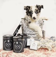 For the classiest of pups. Shop Harry Barker's designer Toile and Pompeii products.