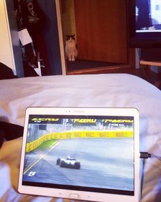 """Why da fuk has u been awake all night and not fed me??""  . . . #kasperithecat #cats #catsofinstagram #instacat #formula1 #f1 #cmoref1 #fp2"