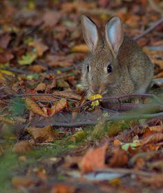 rabbit (by JoFotografie)