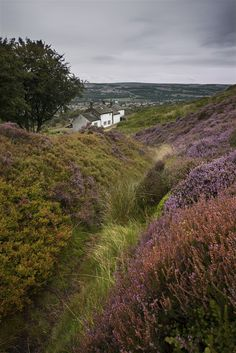 Ilkley Moor, West Yorkshire, England by R.M.Waddington