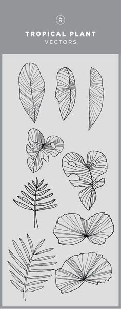 Tattoo sketches 652107221016542892 - Illustrated tropical plant vector graphic Source by ilovekitesurf Zentangle, Doodle Drawing, Sketch Drawing, Drawing Art, Drawing Ideas, Leaf Drawing, Tattoo Sketches, Geometric Drawing, Book Drawing