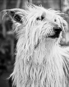 Hong Kong based photographer specializing in lifestyle, portrait, kids, wedding photography. #animal #pets #dog #portrait #lifestyle #life #wildlife #cat #puppy #kitty #animalphotography #petphotography