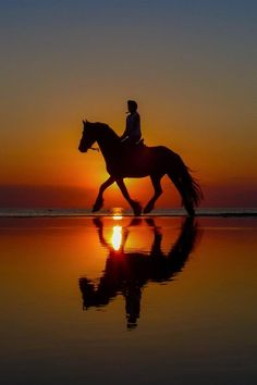 Beautiful horse and rider