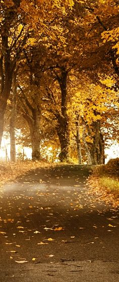 Backroads in autumn  Love those backroads. They are living poetry to the eyes, ears and nose.  http://johnpirilloauthor.blogspot.com/