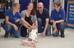 #Pogdogs star tubby Terrier Grommet has found a new family!