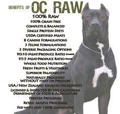 """OC Raw Dog mascot, Shaq. He has been a """"raw"""" dog his whole life! 180 lb Presa Canario"""