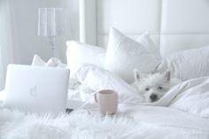 White Bedroom, Master suite, Westie