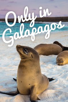 When to Visit the Galapagos: The Galapagos Islands are easily one of the most incredible island archipelagos in the world.
