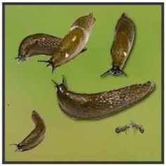 How to get rid of snails and slugs. 101 Gardening Secrets Experts Never Tell You